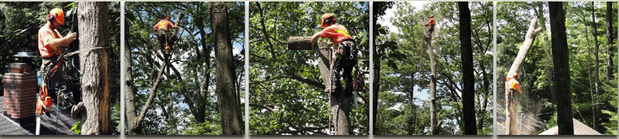 boshkung lake tree service professional arborists provide dangerous tree care and removal